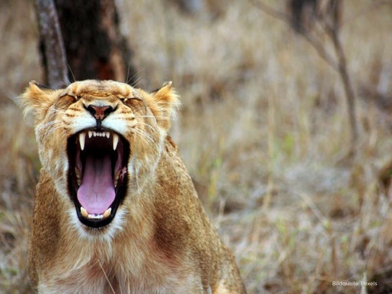 Über die Wut und ihre Bedeutung für dich