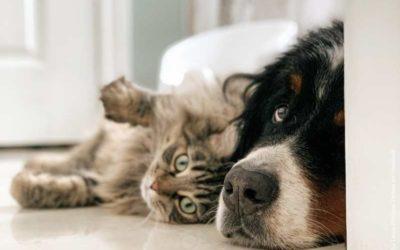 Und was ist mit dem Hund – oder der Katze?