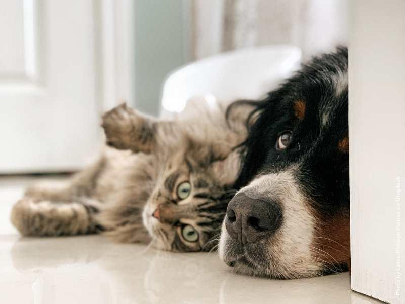 Wenn der toxische Ex den Hund oder die Katze behalten will