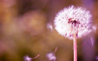 Was Loslassen eigentlich bedeutet – und was nicht